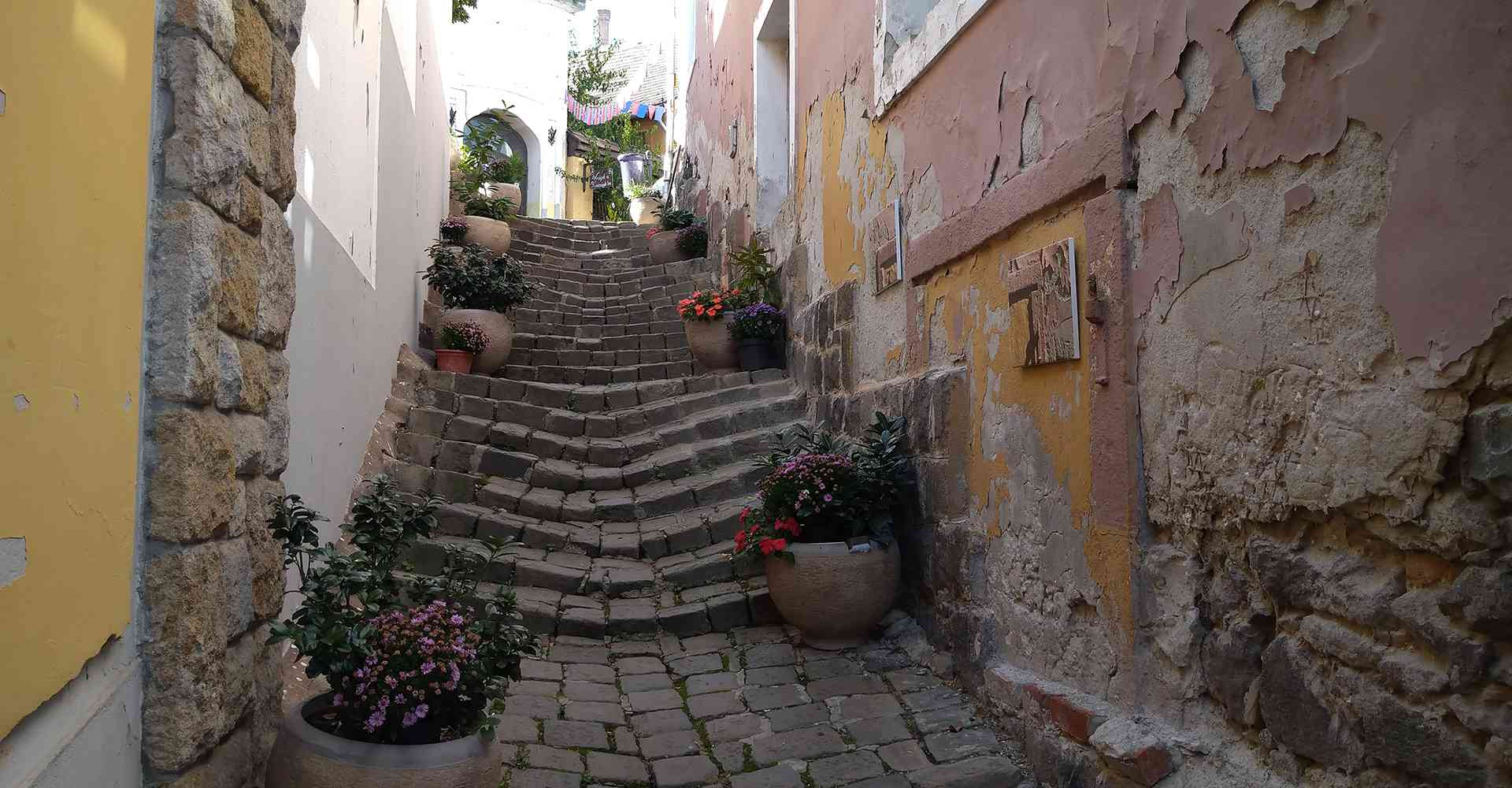 Szentendre_Őri-Art_Gallery_S5-Alley_of_Flowers
